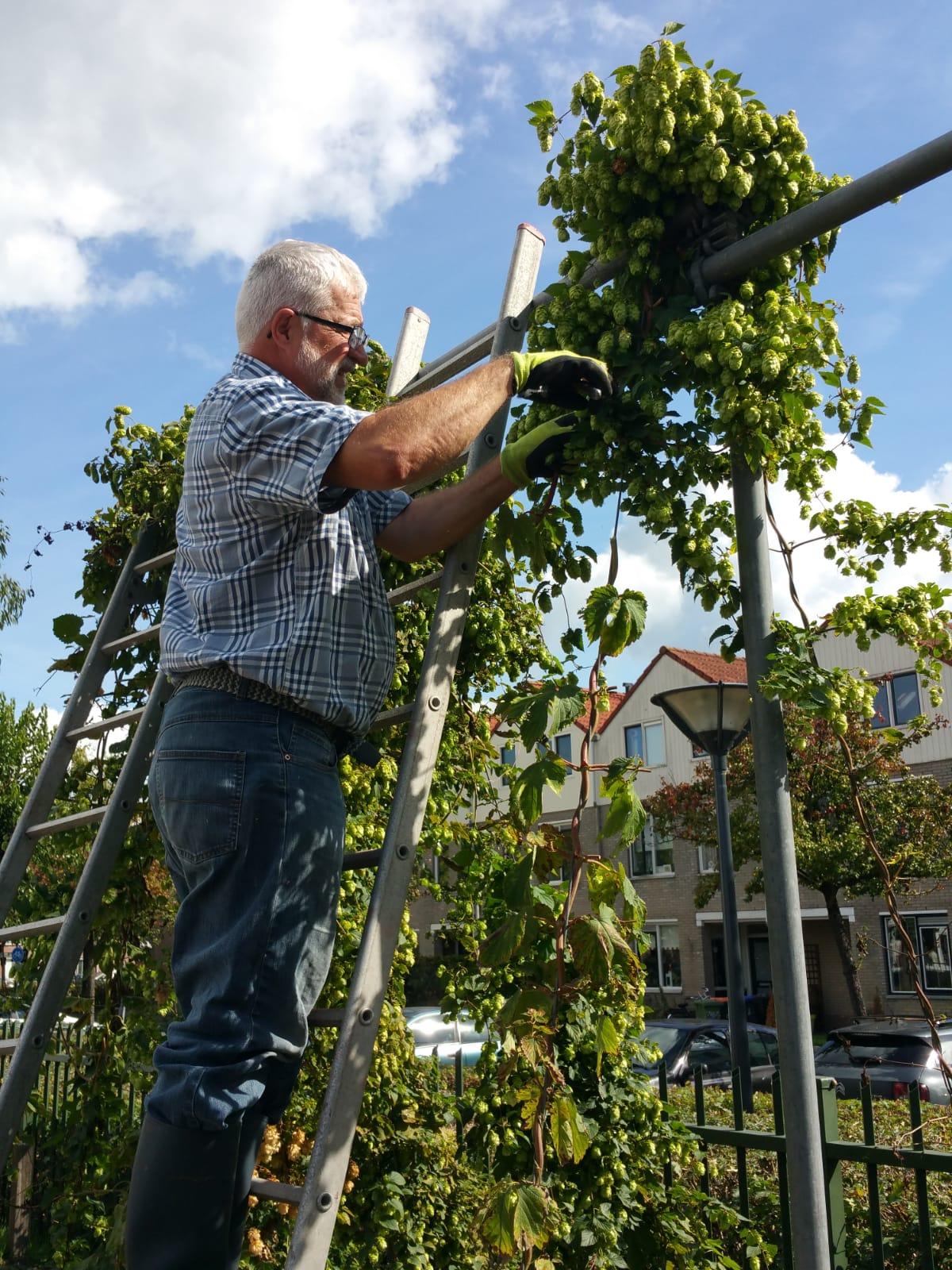 inspectie van de hop